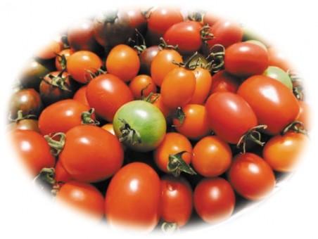 イベント トマト